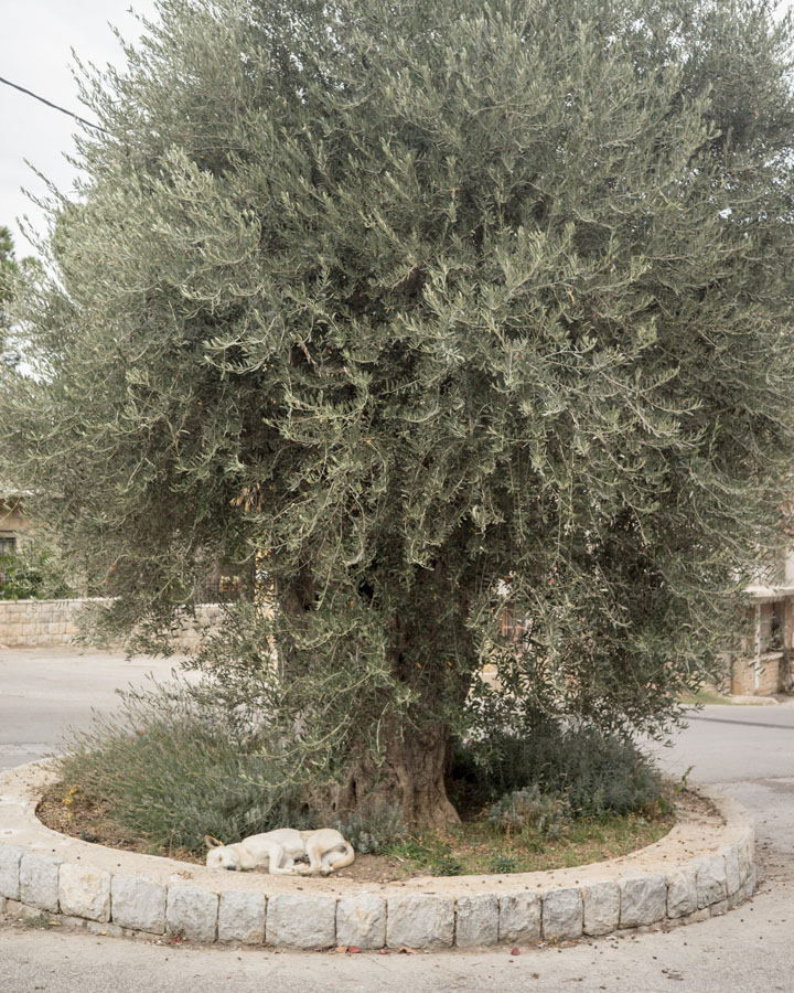 15 Liban Impression Jehel