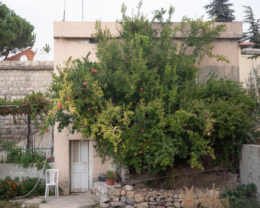 41 Liban Impression Jehel